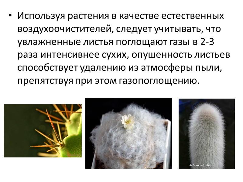 Н. В. Цыбуля, Т. Д. Фершалова  Фитонцидные растения в интерьере (оздоравливание воздуха с