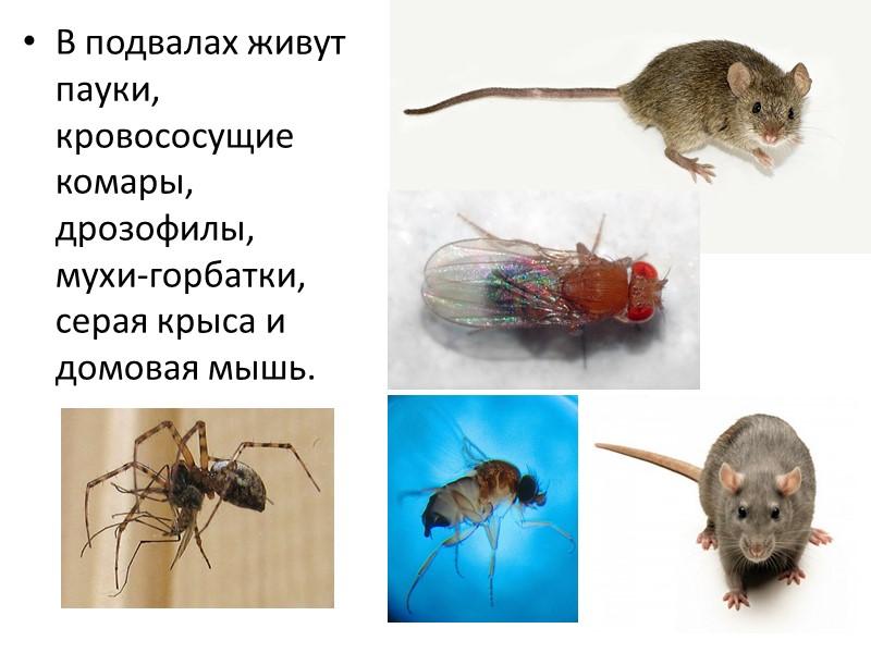 По информации Института иммунологии, каждый третий житель России подвержен аллергии, а в ближайшем будущем