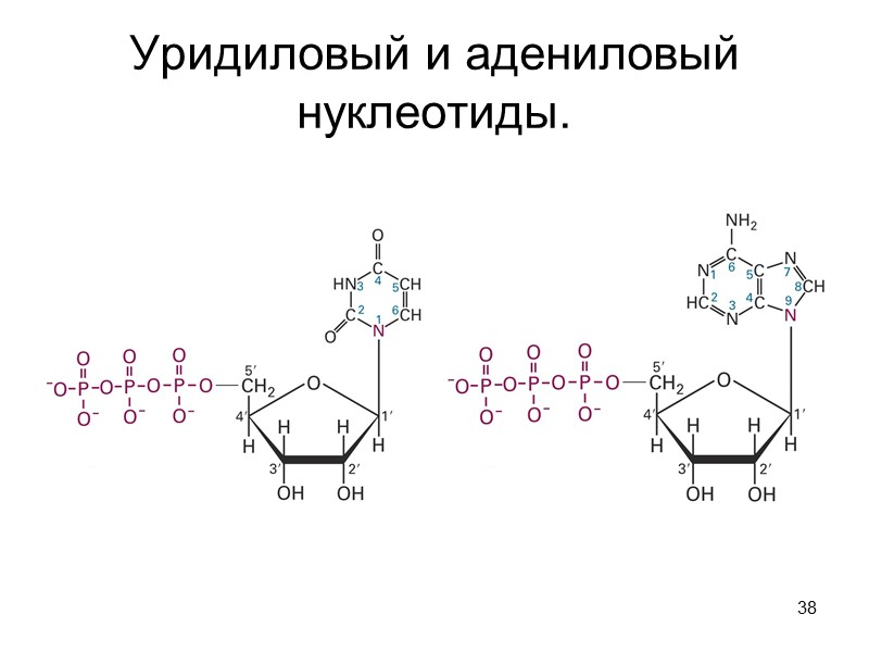 32 В цитозоле гепатоцита         О