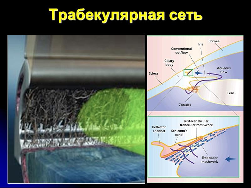 Анатомия слоя нервных волокон сетчатки Височная часть сетчатки Носовая часть сетчатки Папилло-макулярный пучок Горизонтальный