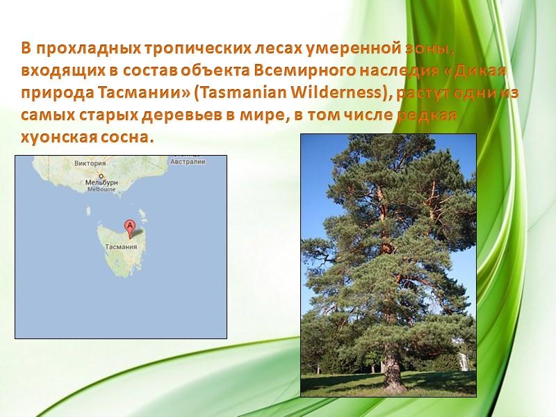 Кроме того, в Австралии произрастает примерно 2800 видов эвкалиптовых (камедных) деревьев и 1000 видов