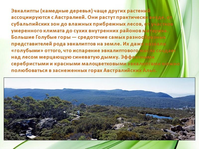 мангровые заросли,           тропические леса.