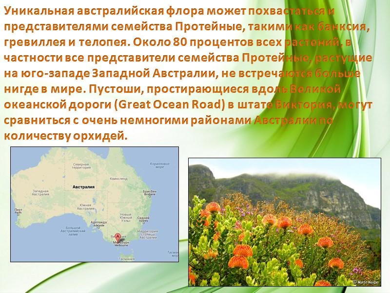 На тысячекилометровой тропе Биббалман (Bibbulmun Track) вам встретятся окаймленные, красиволистные, загнутокрючковые, разноцветные эвкалипты и