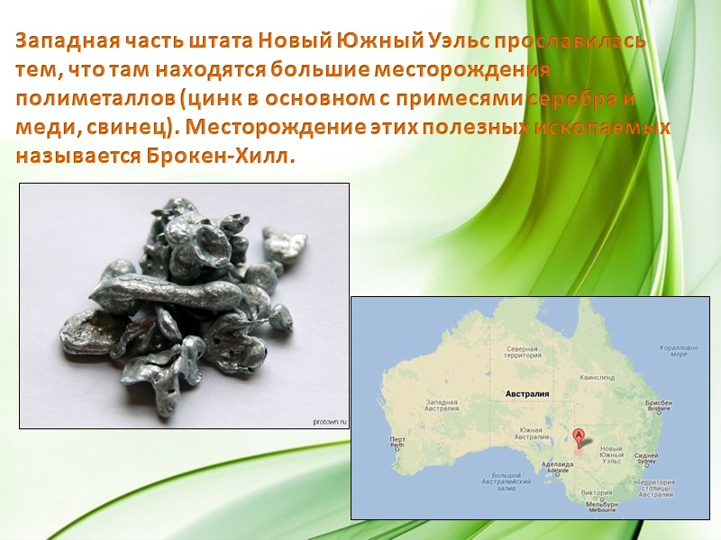 Уникальная австралийская флора может похвастаться и представителями семейства Протейные, такими как банксия, гревиллея и