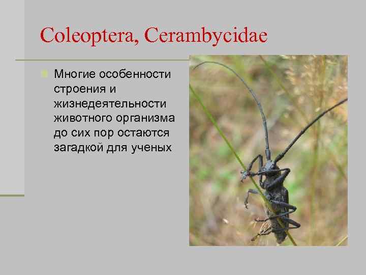 Coleoptera, Cerambycidae n Многие особенности строения и жизнедеятельности животного организма до сих пор остаются
