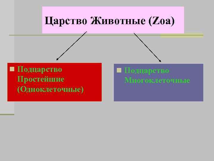 Царство Животные (Zoa) n Подцарство Простейшие (Одноклеточные) n Подцарство Многоклеточные