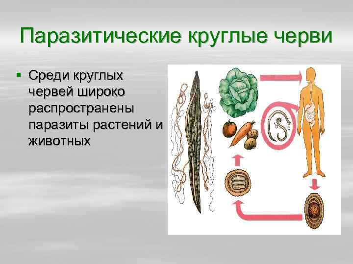Паразитические круглые черви § Среди круглых червей широко распространены паразиты растений и животных