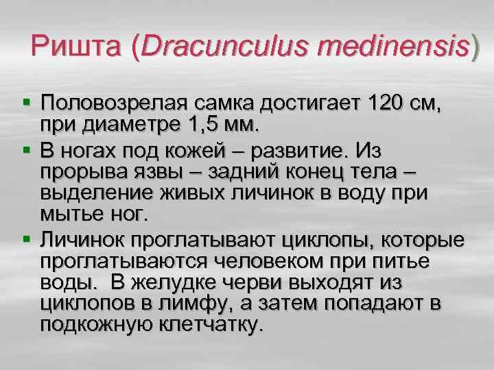 Ришта (Dracunculus medinensis) § Половозрелая самка достигает 120 см, при диаметре 1, 5 мм.