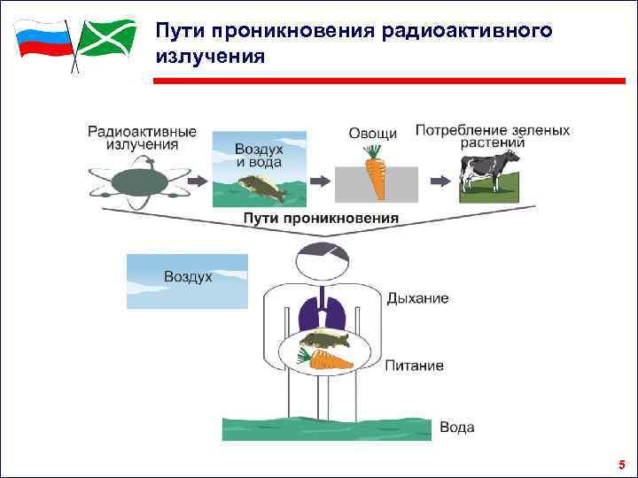Пути проникновения радиоактивного излучения 5