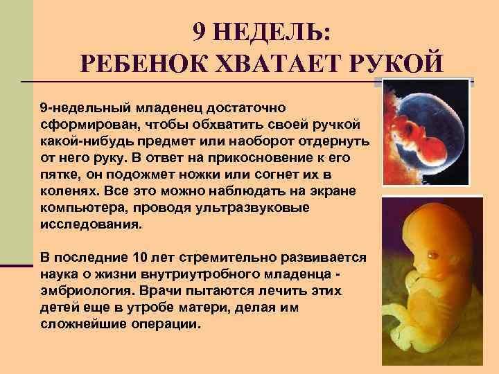 9 НЕДЕЛЬ: РЕБЕНОК ХВАТАЕТ РУКОЙ 9 -недельный младенец достаточно сформирован, чтобы обхватить своей ручкой