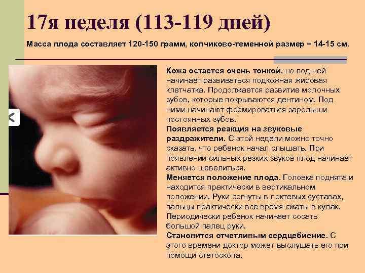 17 я неделя (113 -119 дней) Масса плода составляет 120 -150 грамм, копчиково-теменной размер
