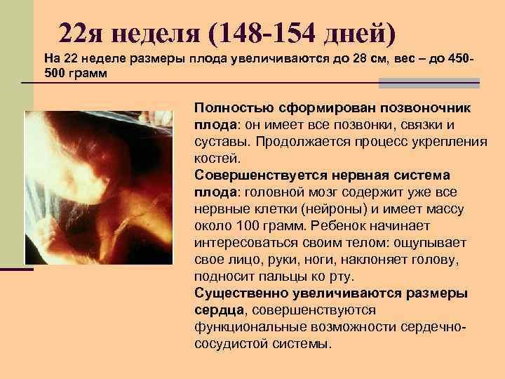 22 я неделя (148 -154 дней) На 22 неделе размеры плода увеличиваются до 28
