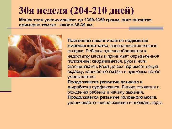 30 я неделя (204 -210 дней) Масса тела увеличивается до 1300 -1350 грамм, рост