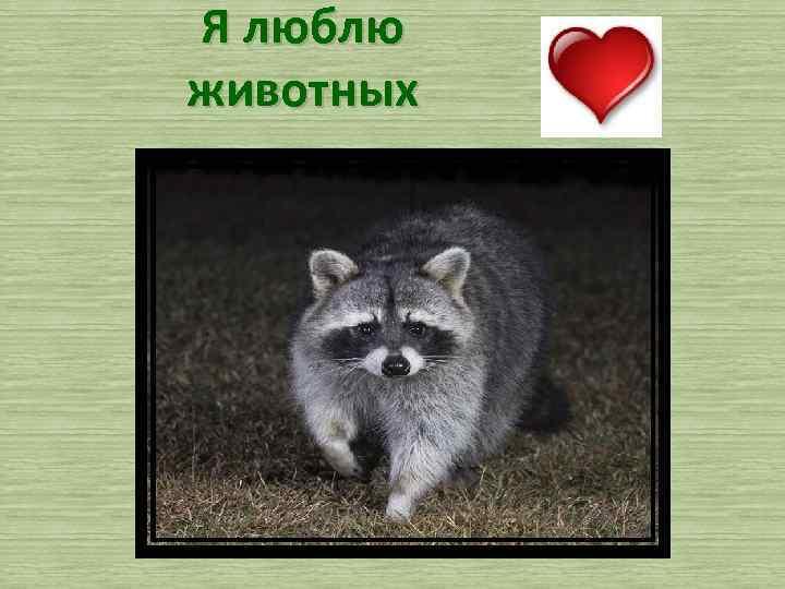 Я люблю животных