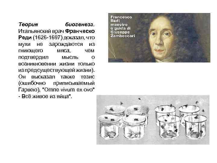 Теория биогенеза. Итальянский врач Франческо Реди (1626 -1697) доказал, что мухи не зарождаются из