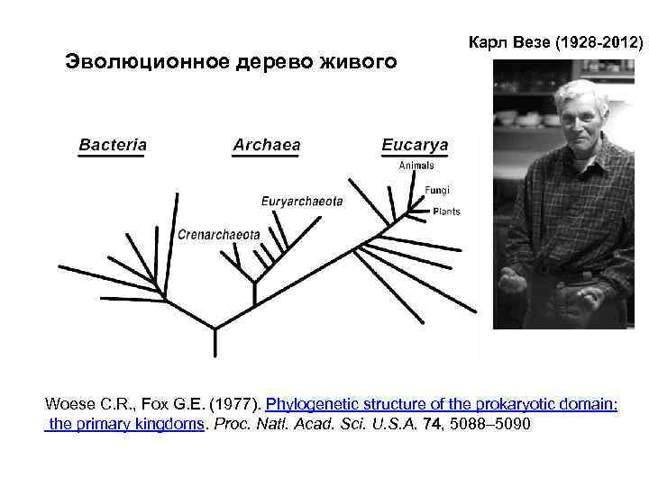 Эволюционное дерево живого Карл Везе (1928 -2012) Woese C. R. , Fox G. E.