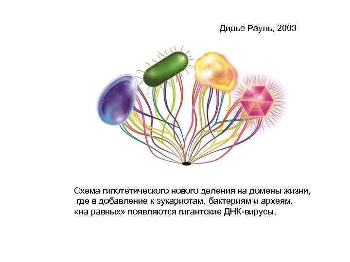 Дидье Рауль, 2003 Схема гипотетического нового деления на домены жизни, где в добавление к