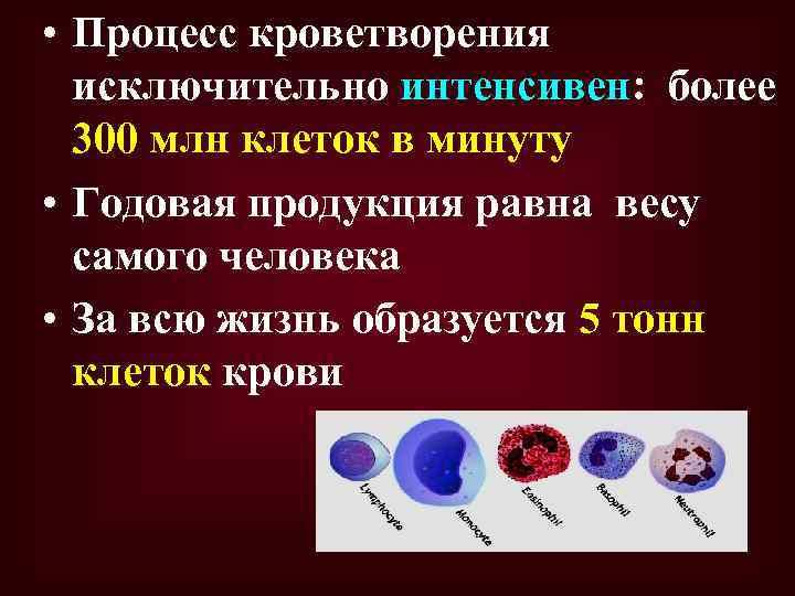 • Процесс кроветворения исключительно интенсивен: более 300 млн клеток в минуту • Годовая