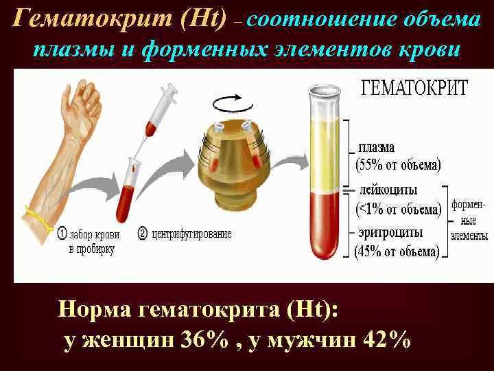 Гематокрит (Ht) – соотношение объема плазмы и форменных элементов крови Норма гематокрита (Ht): у