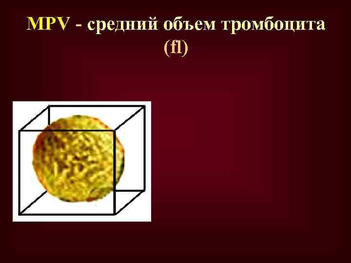 МPV - средний объем тромбоцита (fl)
