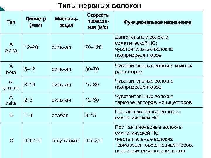 Типы нервных волокон Тип Диаметр (мкм) Миелинизация Скорость проведения (м/с) Функциональное назначение А alpha