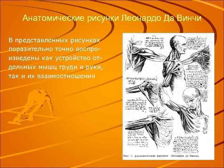 Анатомические рисунки Леонардо Да Винчи В представленных рисунках поразительно точно воспроизведены как устройство отдельных