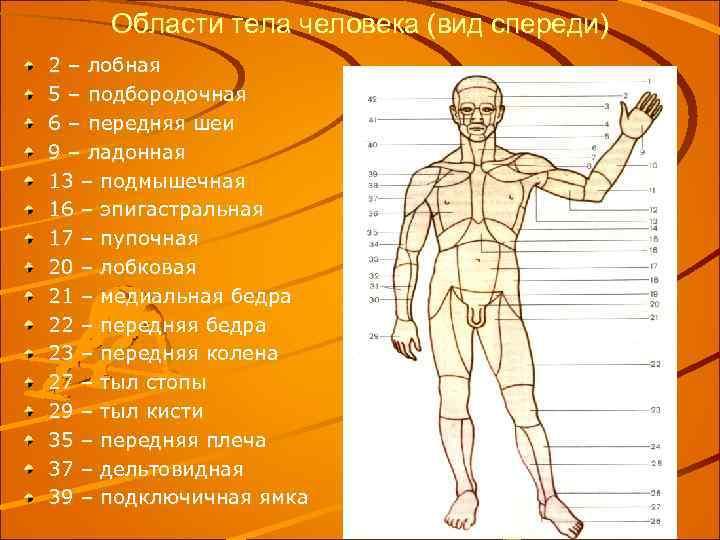 Области тела человека (вид спереди) 2 – лобная 5 – подбородочная 6 – передняя