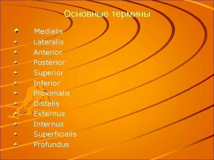 Основные термины Medialis Lateralis Anterior Posterior Superior Inferior Proximalis Distalis Externus Internus Superficialis Profundus