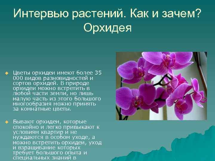 Интервью растений. Как и зачем? Орхидея u u Цветы орхидеи имеют более 35 000