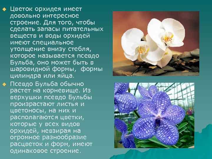 u u Цветок орхидея имеет довольно интересное строение. Для того, чтобы сделать запасы питательных