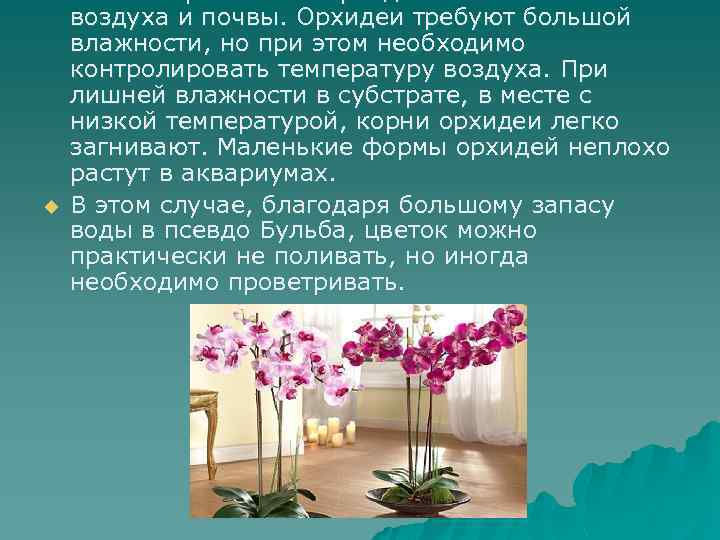 u u Особые требования орхидей к влажности воздуха и почвы. Орхидеи требуют большой влажности,