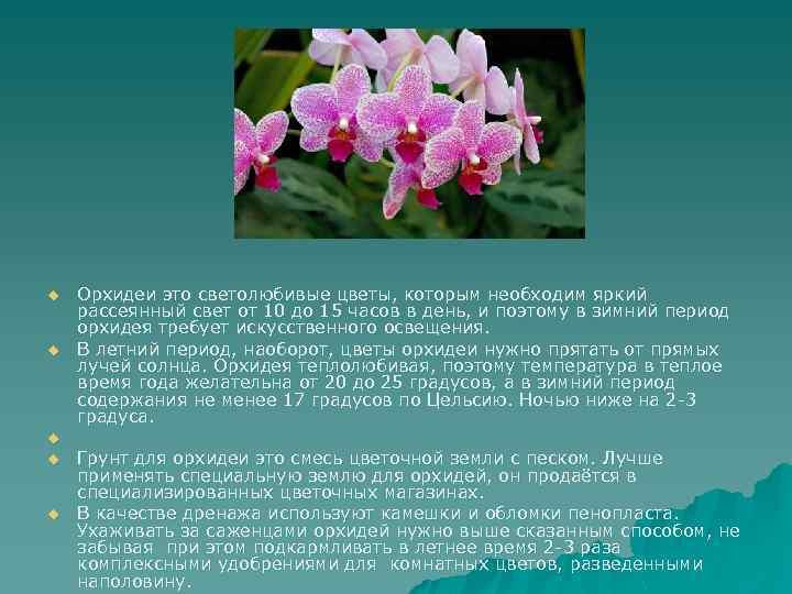 u u u Орхидеи это светолюбивые цветы, которым необходим яркий рассеянный свет от 10
