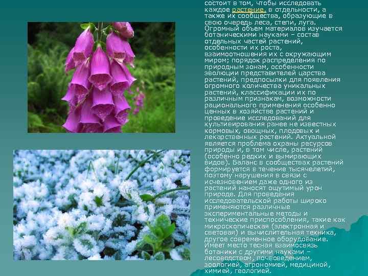 состоит в том, чтобы исследовать каждое растение, в отдельности, а также их сообщества, образующие