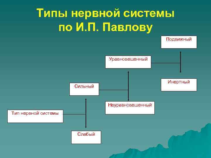 Типы нервной системы по И. П. Павлову Подвижный Уравновешенный Инертный Сильный Неуравновешенный Тип нервной