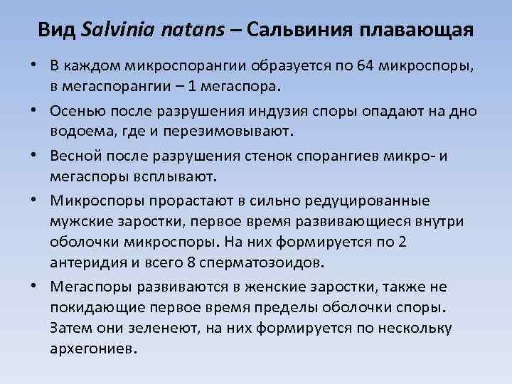 Вид Salvinia natans – Сальвиния плавающая • В каждом микроспорангии образуется по 64 микроспоры,