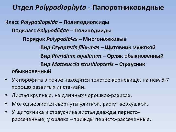 Отдел Polypodiophyta - Папоротниковидные Класс Polypodiopsida – Полиподиопсиды Подкласс Polypodiidae – Полиподииды Порядок Polypodiales