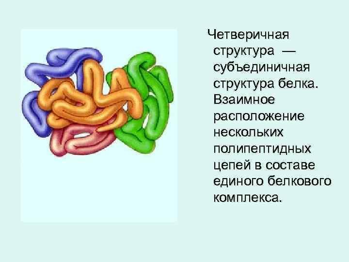 Четверичная структура — субъединичная структура белка. Взаимное расположение нескольких полипептидных цепей в составе единого
