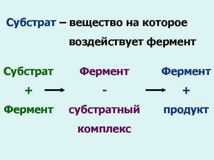 Субстрат – вещество на которое воздействует фермент Субстрат Фермент + - + Фермент субстратный