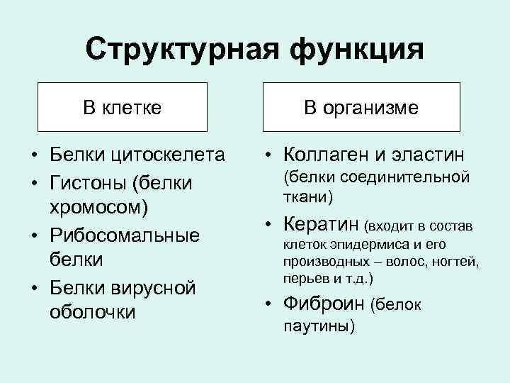 Структурная функция В клетке В организме • Белки цитоскелета • Гистоны (белки хромосом) •