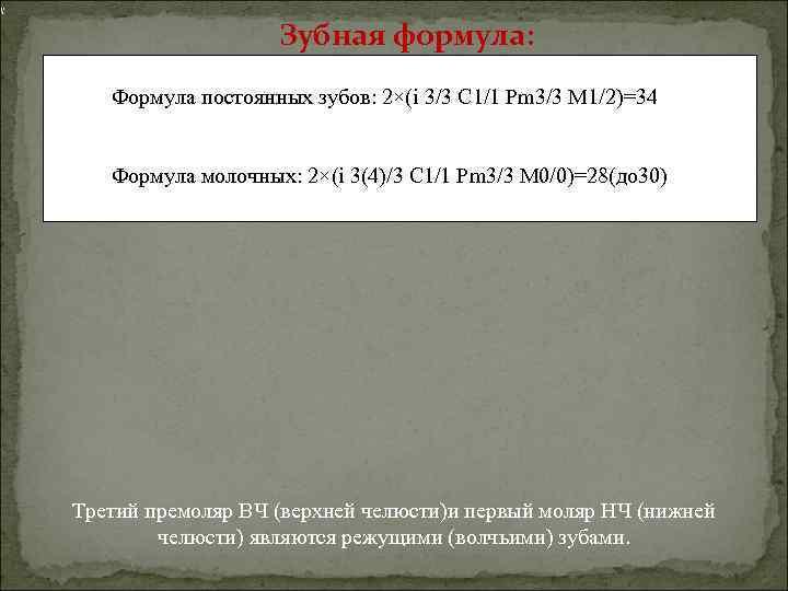 Зубная формула: Формула постоянных зубов: 2×(i 3/3 C 1/1 Pm 3/3 M 1/2)=34 Формула
