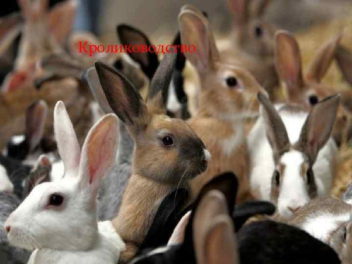 Кролиководство кролиководство