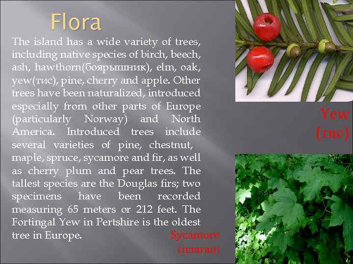 Flora The island has a wide variety of trees, including native species of birch,