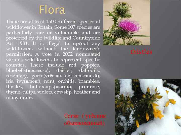 Flora There at least 1500 different species of wildflower in Britain, Some 107 species