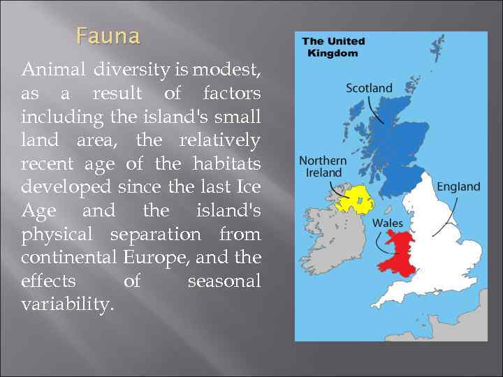 Fauna Animal diversity is modest, as a result of factors including the island's small