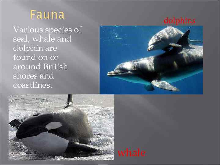 Fauna dolphins Various species of seal, whale and dolphin are found on or around