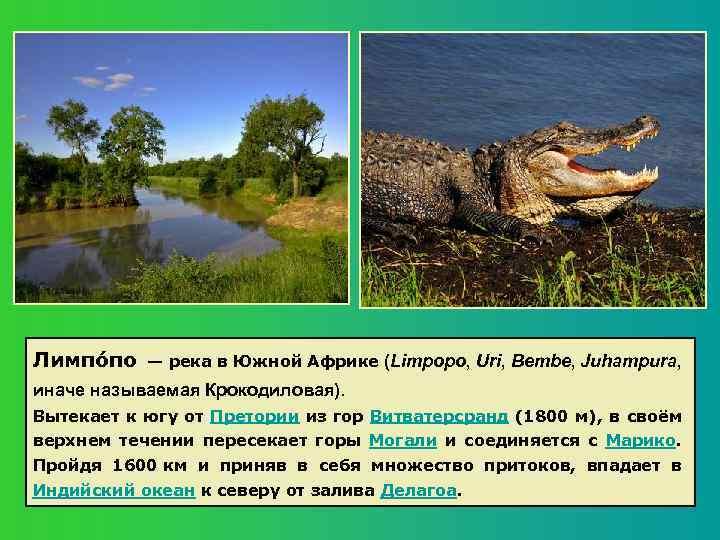 Лимпо по — река в Южной Африке (Limpopo, Uri, Bembe, Juhampura, иначе называемая Крокодиловая).
