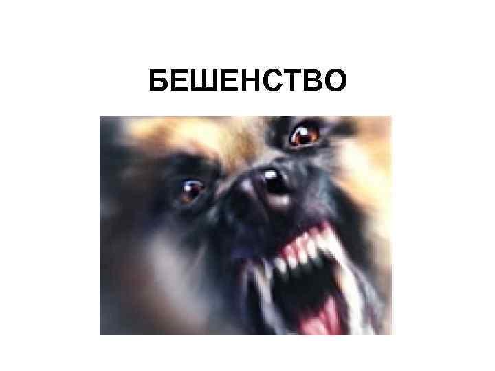 БЕШЕНСТВО