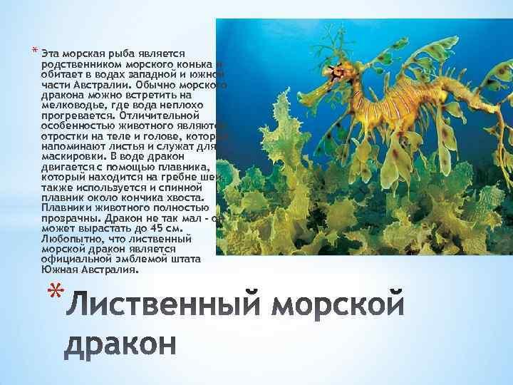 * Эта морская рыба является родственником морского конька и обитает в водах западной и