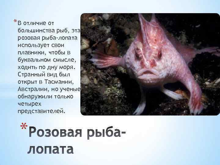 * В отличие от большинства рыб, эта розовая рыба-лопата использует свои плавники, чтобы в