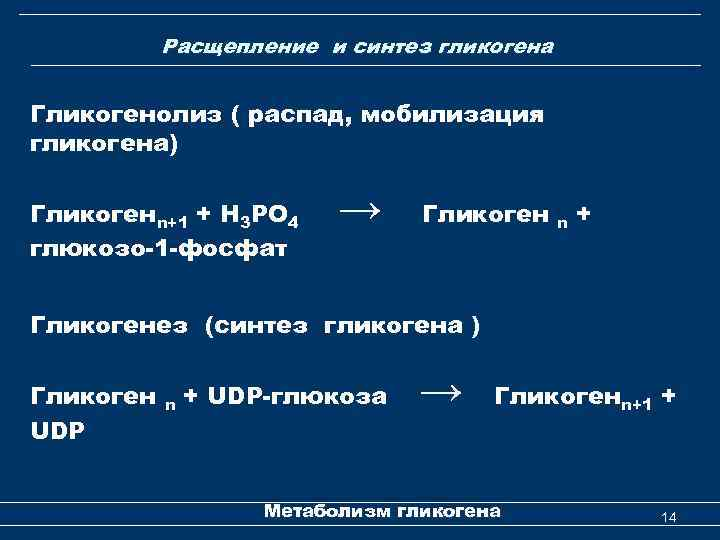 Биохимия и молекулярная биология Лекция 4 Метаболизм гликогена